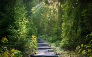 Lichtschein des Glücks im Wald